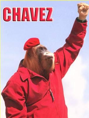 chavez monkey